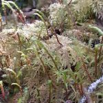 stair-step moss growth